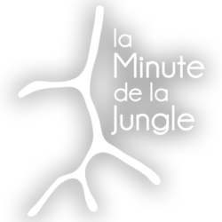la minute de la jungle